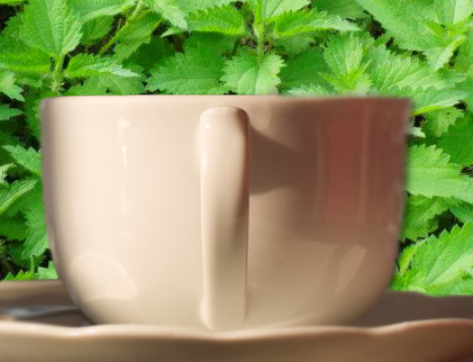 Tea can be made from stinging nettles or alternatively it can be used 3 times daily as a tincture.