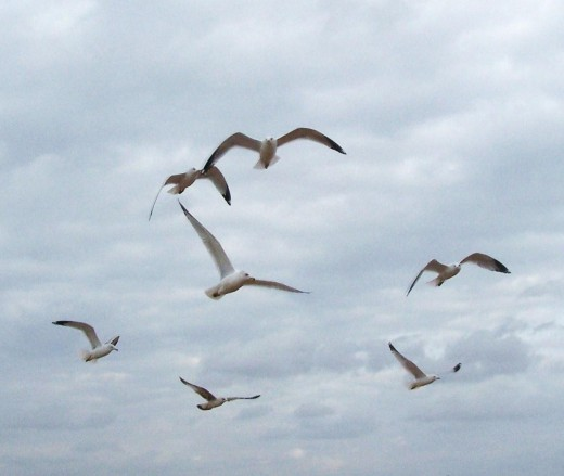 Free as birds in flight