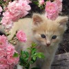 Coraline09 profile image