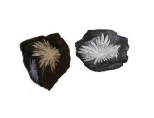 Chrysanthemum Gemstone is also known as Flower Stone
