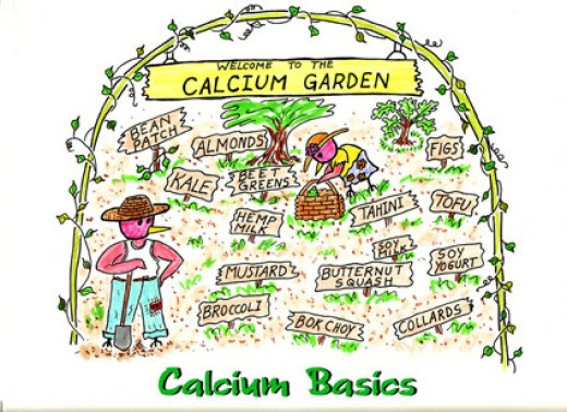 When looking for calcium sources it's best to look at food first.