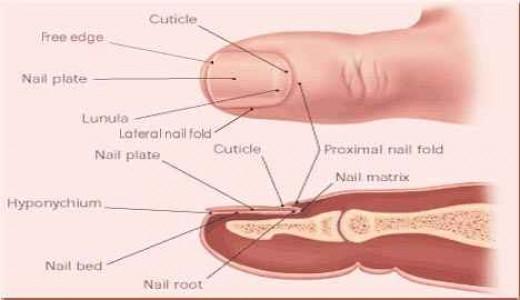 Caring For Fingernails 73