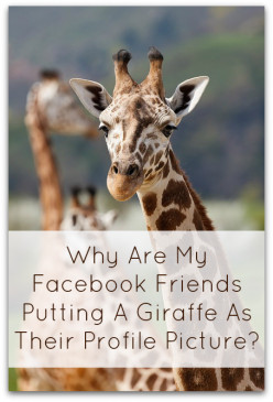 Facebook Riddle Giraffe Profile Pictures: Do They Contain Malware Or Hacks? + Answer