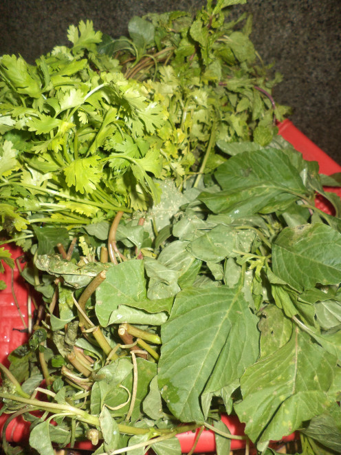 Leafy Vegetables(Mint,Coriander,Spinach)