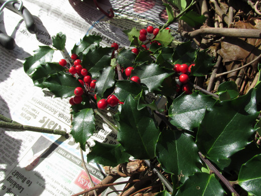 Push holly or other stems into grapevine wreath, and keep adding more until you are happy with the arrangement.