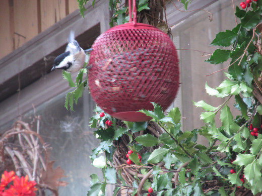 The hanging feeder will swing as birds land on and fly off from it.  That's another reason to make sure the plant/wreath hanger is a good distance from your window.