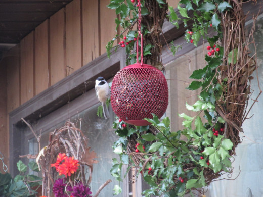 Chickadees are very curious, and will be the first ones to explore new things in their environment.