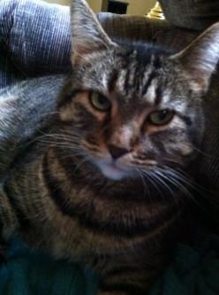 Kitty Sasha