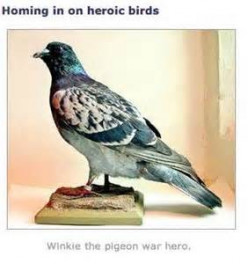 World Wars: Pigeons in Battle Animal VC Winners.