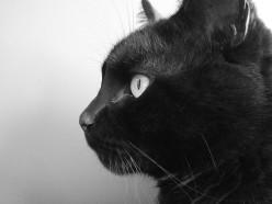 Egyptian Animal Spirit Guides: Cat, Bull, Frog, Jackal, and More