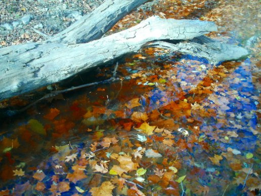 Fall leaves in Mission Creek