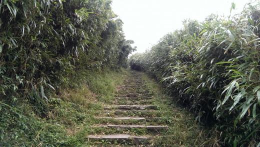 Chinese Bamboo Grove