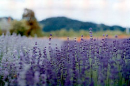 The colour purple in nature is mysterious, enchanting and fantastical.