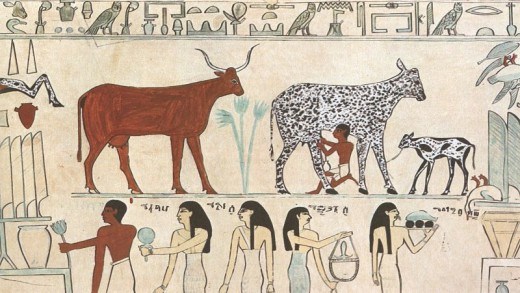 Showing domesticated cows/bulls in an Ancient Egyptian relief.