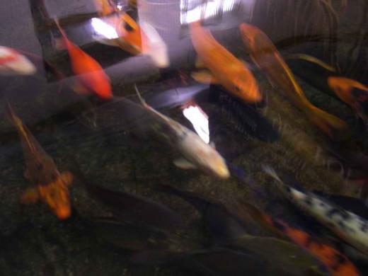 fishes via morgueFile