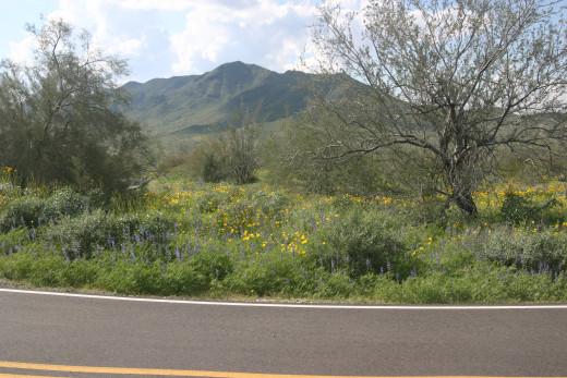 Roadway Along South Mtn., AZ