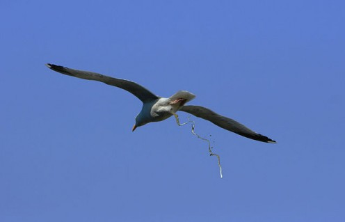 how to get rid of bird poo