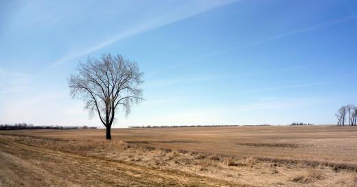 Manitoba's Prairie
