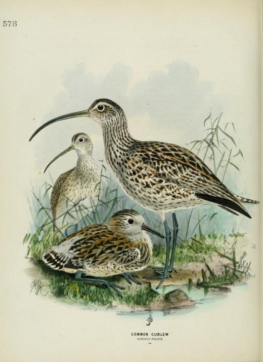History of the Birds of Europe  -Dresser 1871-1881}