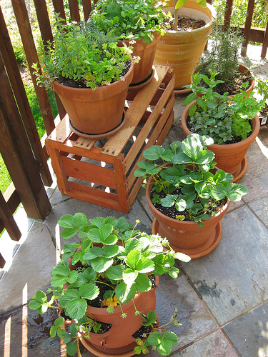 container gardening pictures