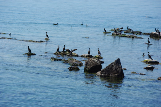 Cormorants and many other aquatic birds call this park home.