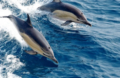 Are Dolphins Smarter Than Humans?