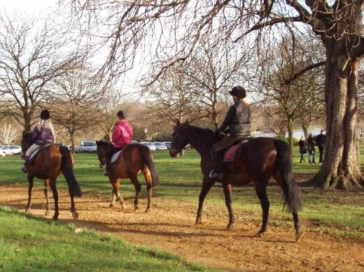 Horse Riding at Hyde Park