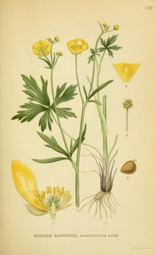 Billeder of Norden's Flora 1917-1927