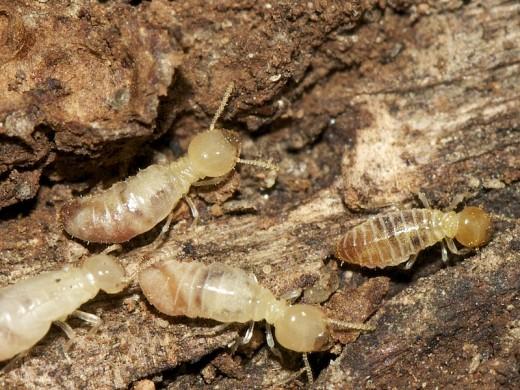 Oh no! Termites!
