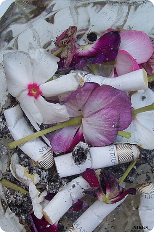 destruction of nature from niki_photograph flickr.com