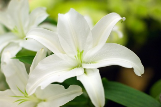 The White Lily signified Joy, Hope and Life.