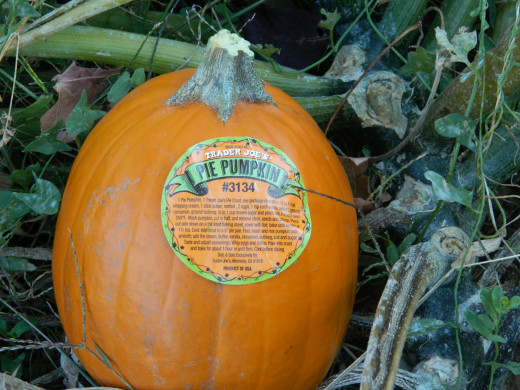 Pumpkin Pie pumpkin from Trader Joe's