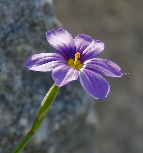 Purple Wildflower from Julia Clark flickr.com