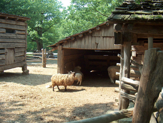 Some of the animals at Lincoln Living Historical Farm