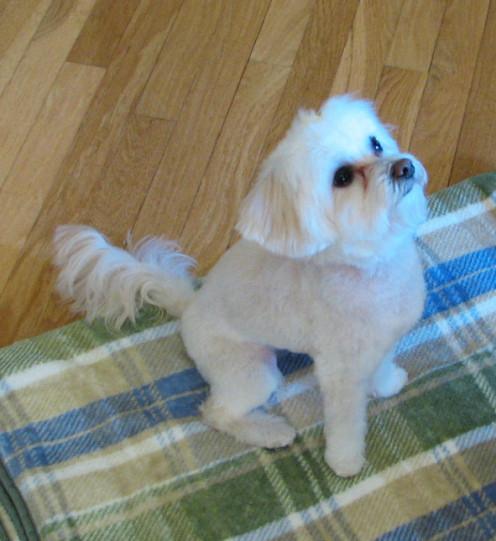 Daisy's haircut 11-13-13
