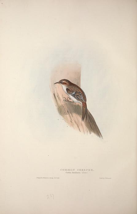Birds of Europe {Gould- 1837}