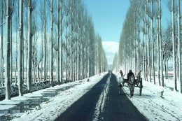 Gulmarg is a town, a hill station, a popular skiing destination and a notified area committee in Baramula district in the Indian state of Jammu and Kashmir.