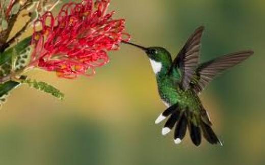Kovaly's little bird