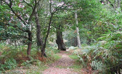 On the way south Ivar, Hrothulf, Aethel and Theodolf pass the eastern rim of the Shire Wood (Sherwood Forest). It would have been asking for trouble,.even in King Eadward's time the area was infested with outlaws and the dispossessed