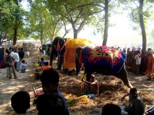 Decorated elephants at the Haathi Baazar (Elephant Market)