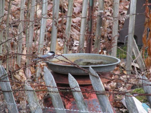 "Birds use this simple bathing basin a lot.  It's about 2-1/2"" deep, and I add a flat stone for smaller birds."