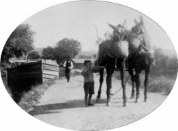 Child leading mules on the Delaware and Hudson Canal, believed to be near Rosendale, New York.