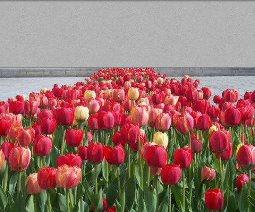 Tulips and recovery - from coast to coast