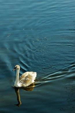Simplicity from Nana B Agyei flickr.com