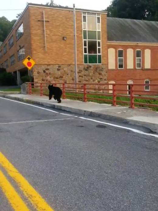 You decide, is this really a bear running across the street by our local Catholic school or is someone good at photo shop?