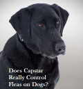 Capstar for Dogs: Uses and Where To Buy