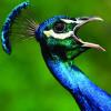 susannj11 profile image