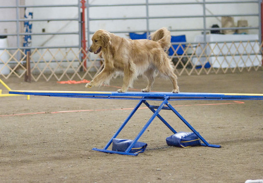 This teeter totter is balanced because the dog is positioned near the fulcrum.