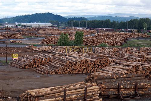Weyerhaeuser company raw logs.