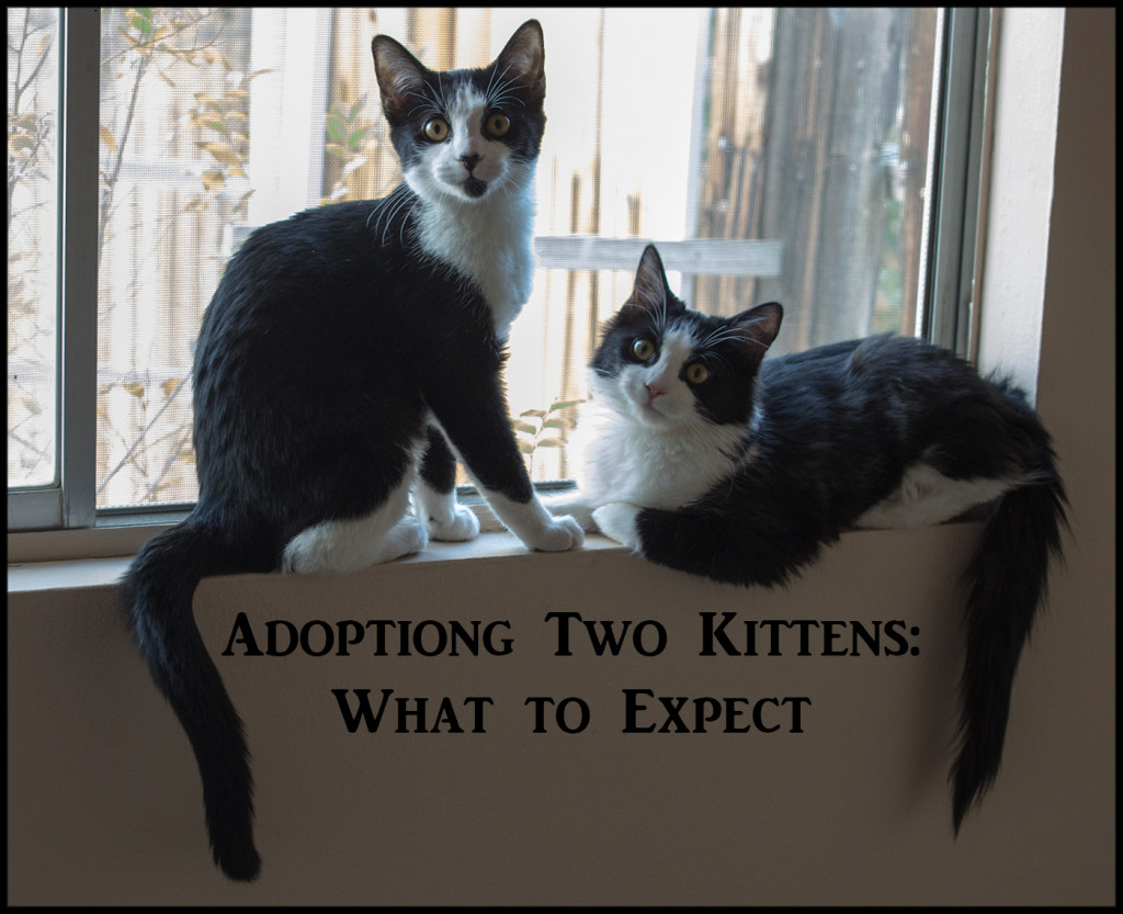What To Expect When Adopting A Shelter Cat